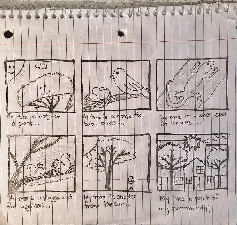 Story-board style drawings telling the story of a neighborhood tree