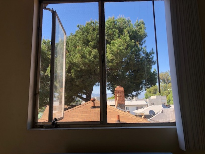 Photo of a tree being viewed through a window
