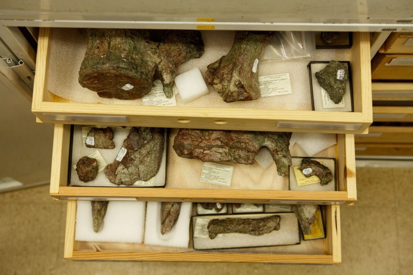 open drawers containing fossils