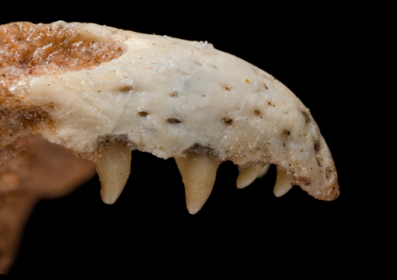 right_lateral_view_external_nares