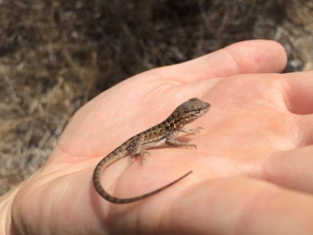 lizard in palm of hand