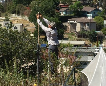 Miguel setting up a bat detector in a large backyard in the Atwater neighborhood of Los Angeles