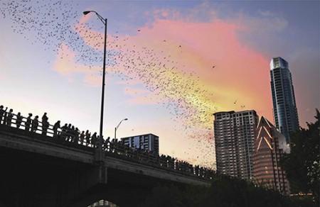 Austin, Congress Bridge, Bats, Dusk