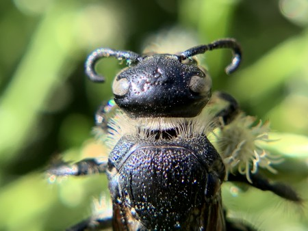 Close-up of wasp's head with curled moustache-like antennae