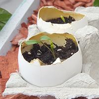 Eggshell indoor herb garden
