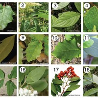 Image for Leaves as Thermometers activity