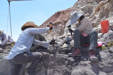two women using tools to excavate a fossil out of the rock