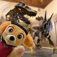 Skye from PAW Patrol in front of dueling dinos