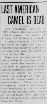 'Last American Camel is Dead' Topsy's obituary, Madera Tribune, published April 27th, 1934.